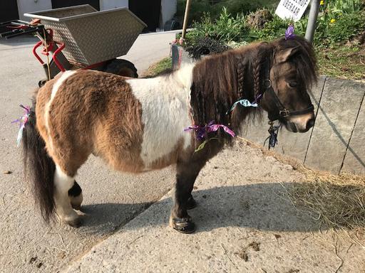 "Kurs ""Pony-Kurs"" (Frühling 2019)"