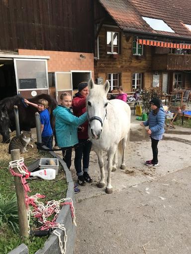 """Kurs """"Erlebnis Pferd"""" (Frühling 2019)"""