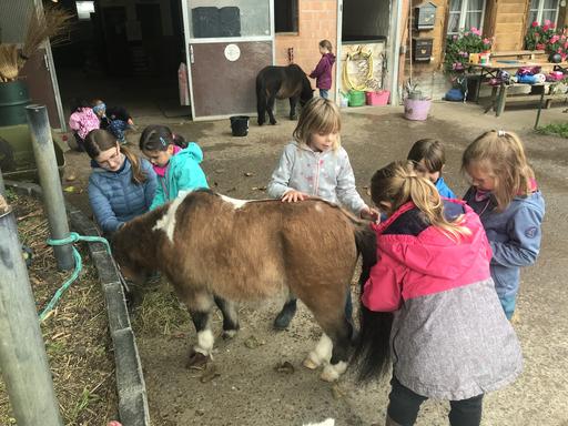 "Kurs ""Pony-Kurs"" (Herbst 2020)"